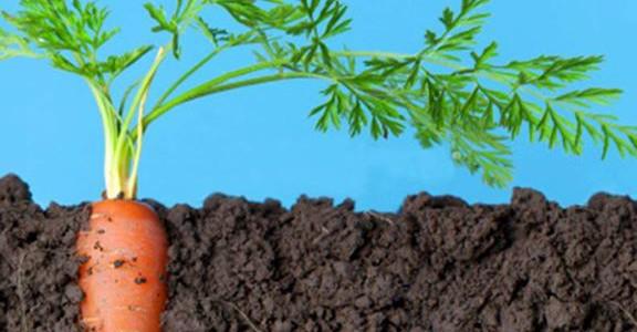 Protejeaza-ti pielea impotriva razelor UV cu ajutorul uleiului de morcov!