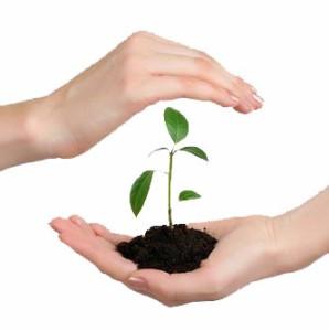 protectia plantelor acaricide