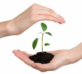 Acaricidele – substante pentru protectia plantelor