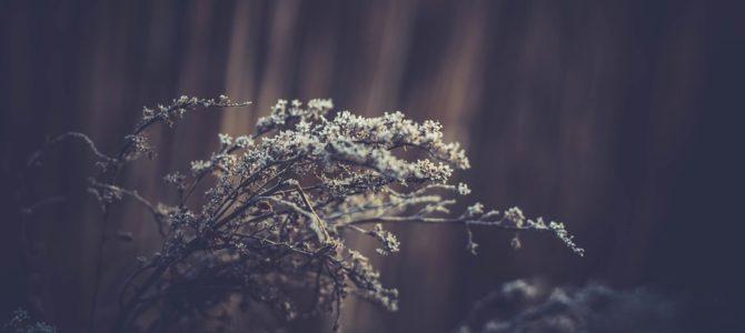 Protejarea culturilor de inghet iarna