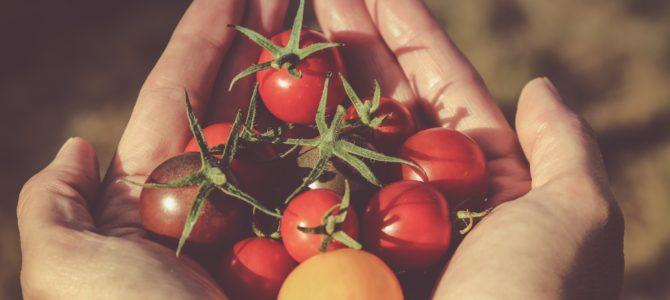 Ce culturi sunt gata de recoltare in septembrie?